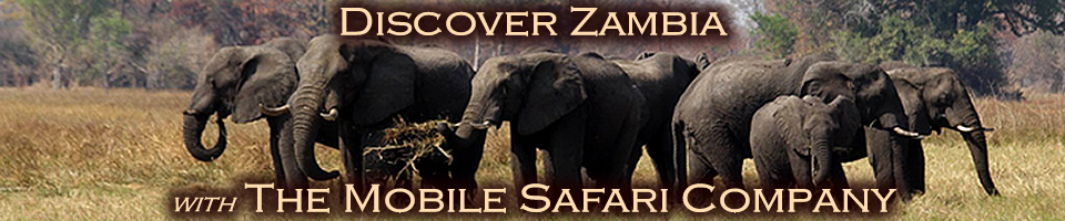 Wild Kafue - Mobile Tented Safaris
